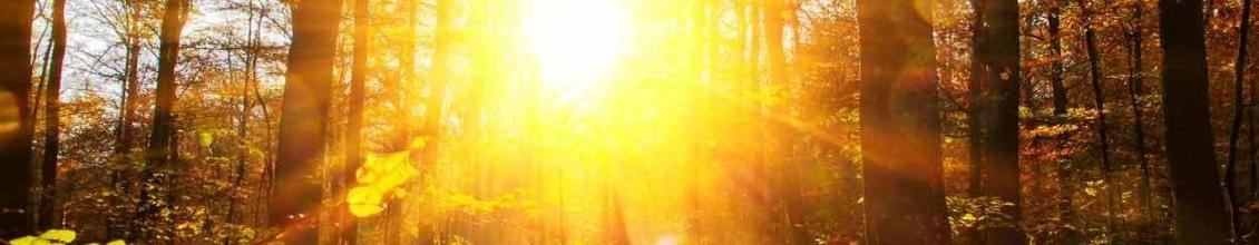 Bild von stark scheinender Sonne im Wald