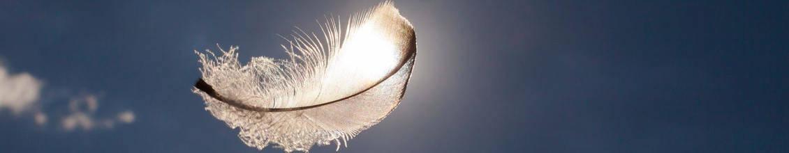 Fliegende Feder
