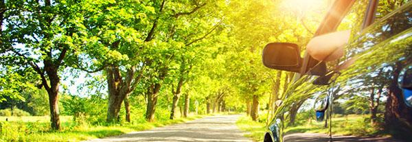 Entspannter Autofahrer in einer Allee auf dem Land