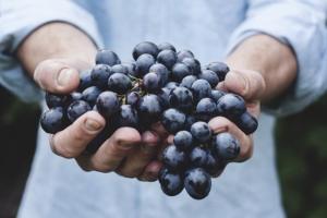 Bild von Weintrauben in Händen